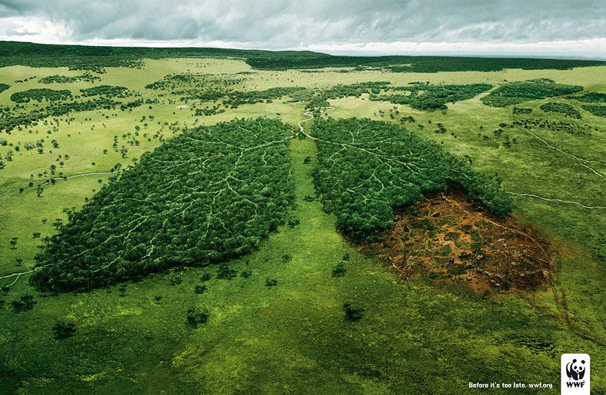 campagne deforestation